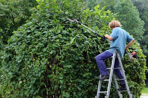 How and when to prune